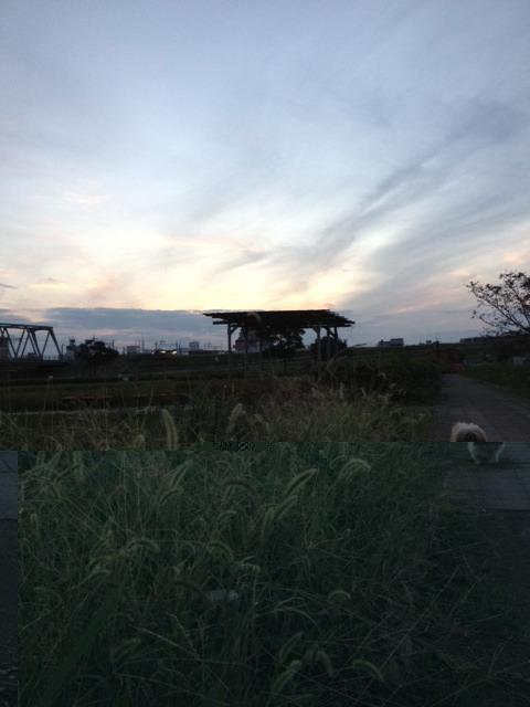 akipuu201210.jpg